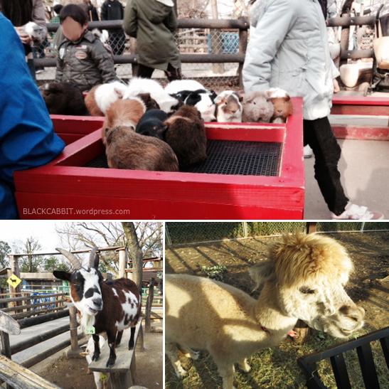 Japan Petting Zoo