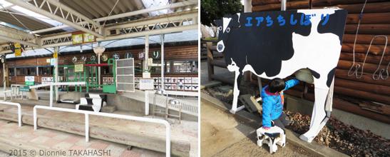Milking Cows in Zoo