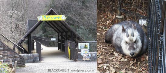 Trekking path in Zoo