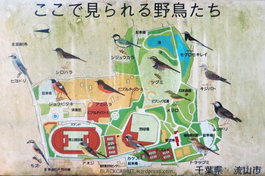 Nagareyama City Park