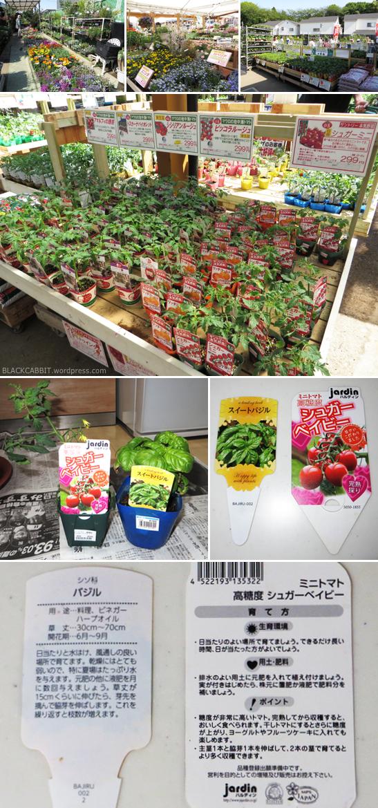 Planting Mini tomato