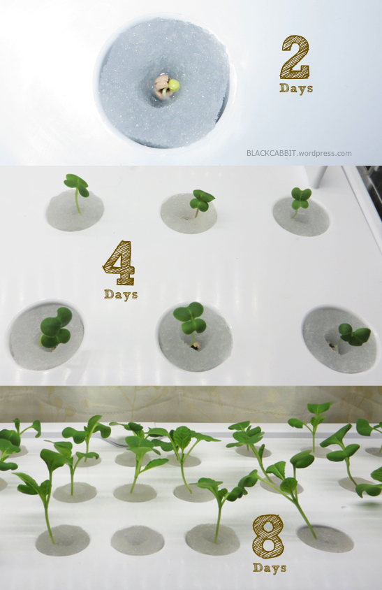 growing plants without soil