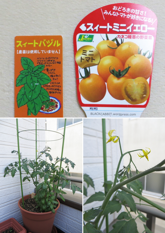 Yellow Tomato plants